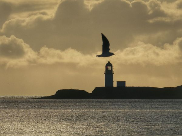 Seagull in Stornoway Harbour Autumn colors Autumn Scotland Isle Of Lewis Scotlandsbeauty Sky Cloud - Sky Sea Architecture Water Built Structure No People Nature Tower Statue Sunset Building Exterior Sculpture Representation Guidance Art And Craft The Past History Lighthouse Outdoors