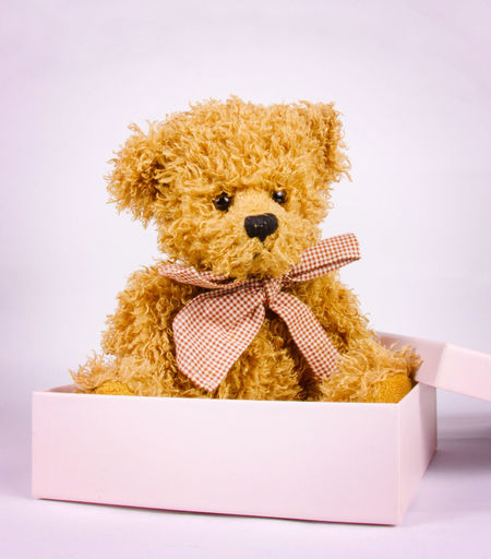Bandage Bear Box Childhood Close-up Cute Gift Indoors  No People Open Single Small Studio Studio Shot Stuffed Toy Teddy Teddy Bear Teddy Bears Teddybear Toy White Background