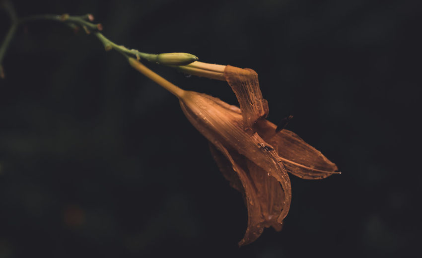 Close-up of wilted flower