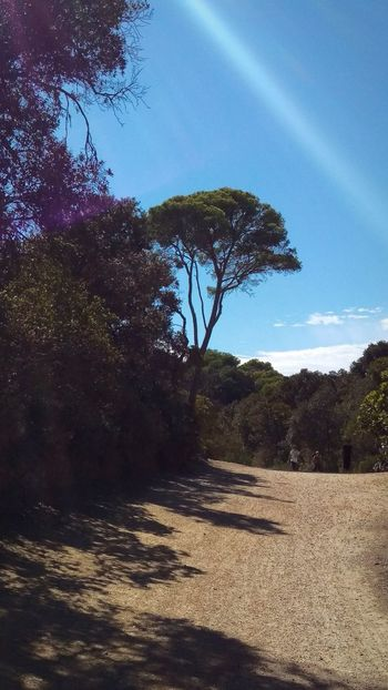 Tree Nature Beauty In Nature Looking Around Sunlight Taking A Trip Enjoying Life Lens Flare Porquerolles
