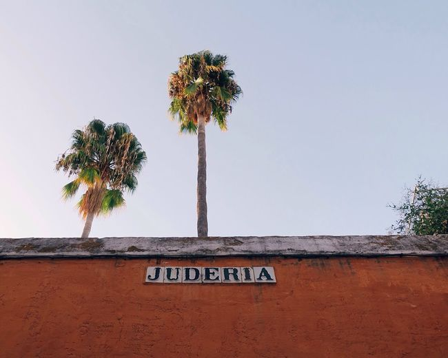Low Angle View Of Juderia Text On Wall Against Palm Trees