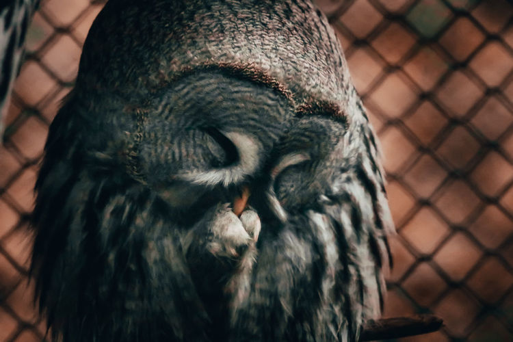 One Animal Animal Animal Themes Animals In The Wild Vertebrate Animal Wildlife No People Monkey Day Animal Body Part Zoo Animal Head  Focus On Foreground Mammal Animals In Captivity Cage Close-up Primate Fence Chainlink Fence