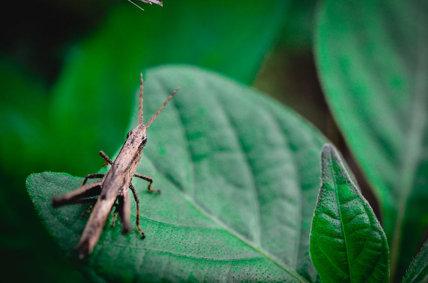 Animal Themes Animals In The Wild Beauty In Nature Close-up Crawling Day Extreme Close-up Focus On Foreground Green Green Color Growth Insect Leaf Leaf Vein Nature No People One Animal Orange Color Outdoors Plant Selective Focus Wildlife Zoology