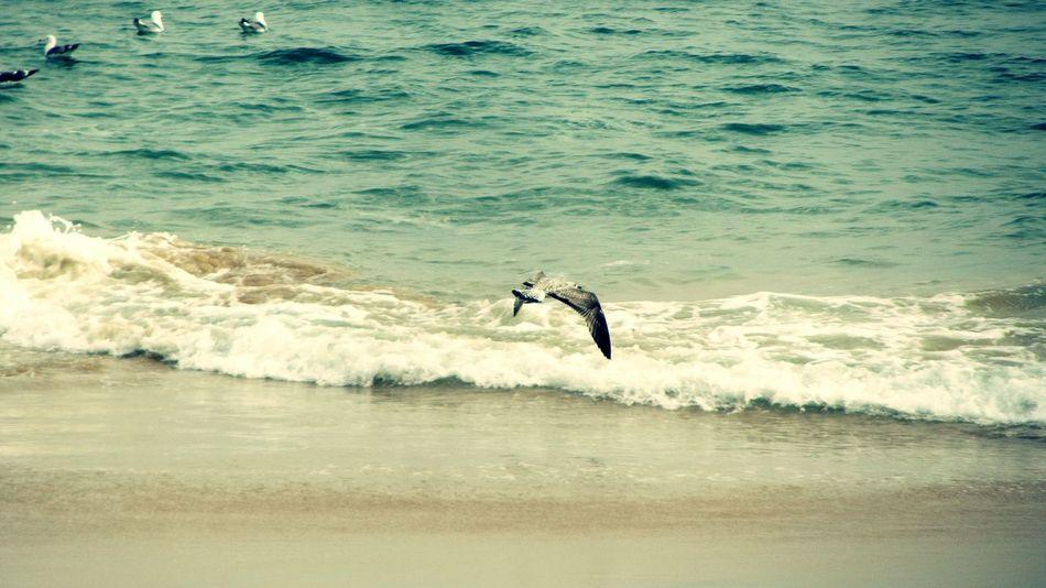 Flying Seagull... Flying Seagull SEAGULL IN FLIGHT Seagulls And Sea Seagulls Taking Photo Taking Pictures Taking Photos