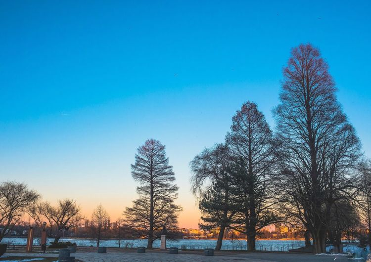 Bare trees by sea against blue sky during sunset