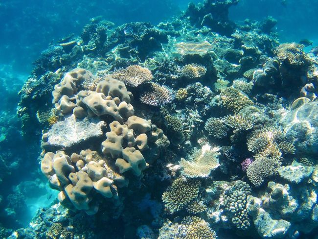 Underwater Sea Life UnderSea Sea Coral Water Beauty In Nature Nature Animal Themes Soft Coral Animals In The Wild No People Multi Colored Day ~ Greatbarrierreef Cairns, North Queensland, Australia