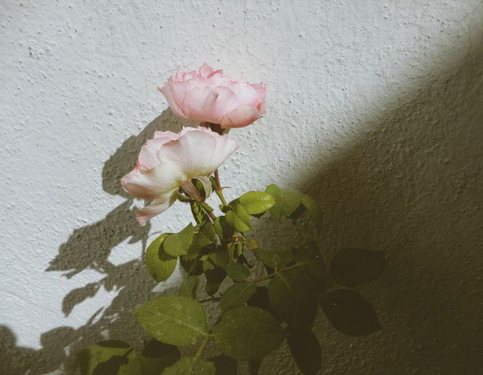 Beautiful Beauty In Nature Digital Photo Flowers Softness