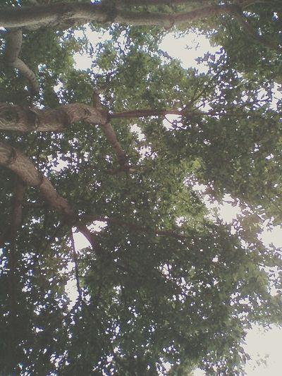 还记得学校操场上的那颗老树吗。