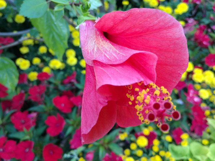 Selective Focus Like Fantasy The Purist (no Edit, No Filter) No Edit/no Filter No Filter, No Edit, Just Photography Flower Nature Petal Plant Growth Pink Color Multi Colored Blooming No People Bougainvillea Flower Head Freshness EyeEm Best Shots EyeEm Best Shots - Nature Exceptional Photographs Nature Eye Em Nature Lover Plant Flowerporn EyeEm Nature Lover Breathing Space The Week On EyeEm EyeEmNewHere