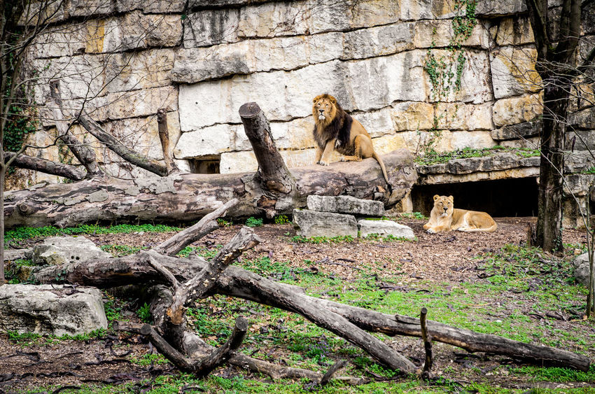Animal Themes Animals In The Wild Baboon Day Mammal Nature No People Outdoors THREATS Tree
