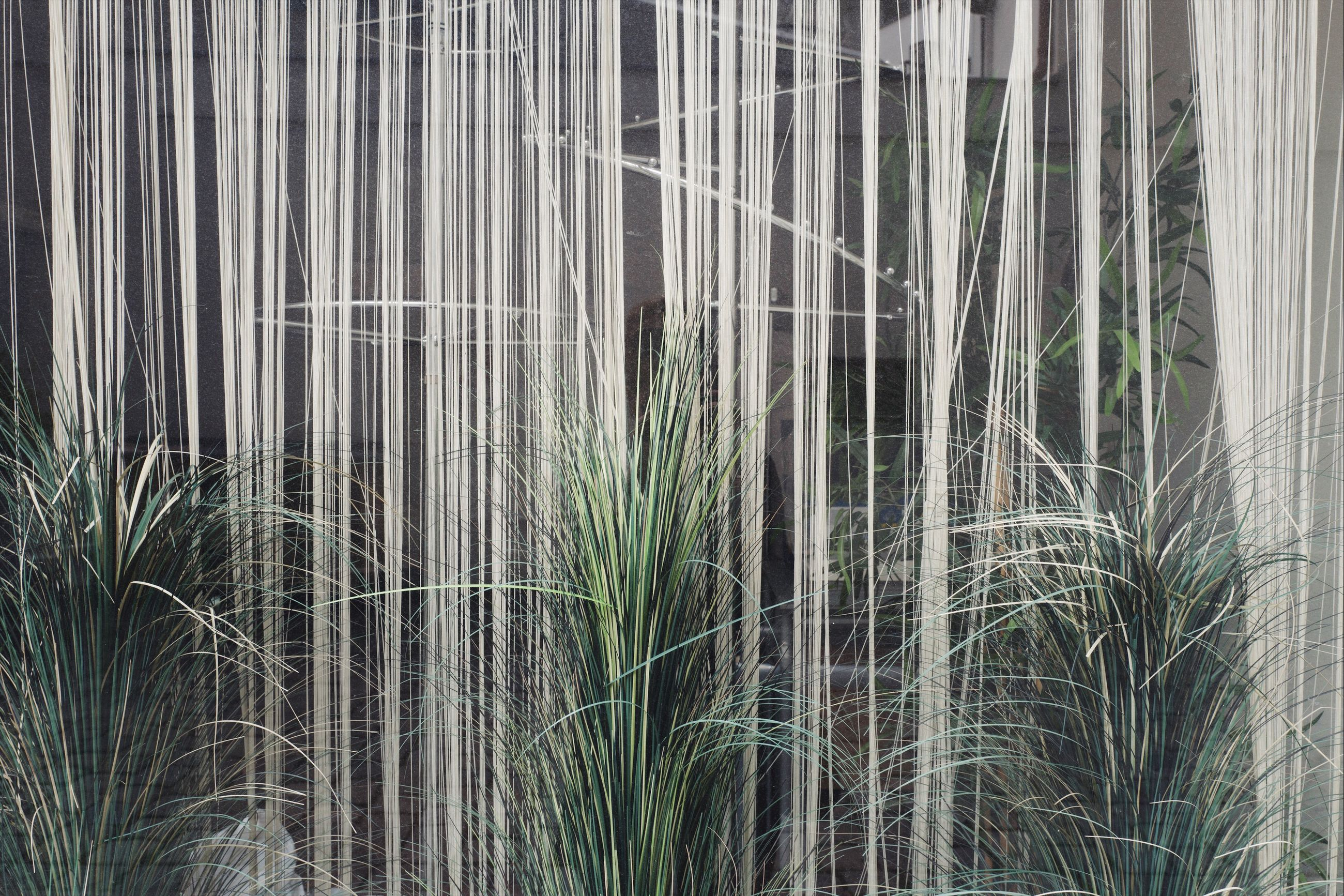 growth, plant, no people, beauty in nature, nature, grass, green color, day, land, tranquility, outdoors, close-up, backgrounds, bamboo - plant, water, field, tree, forest, agriculture, architecture