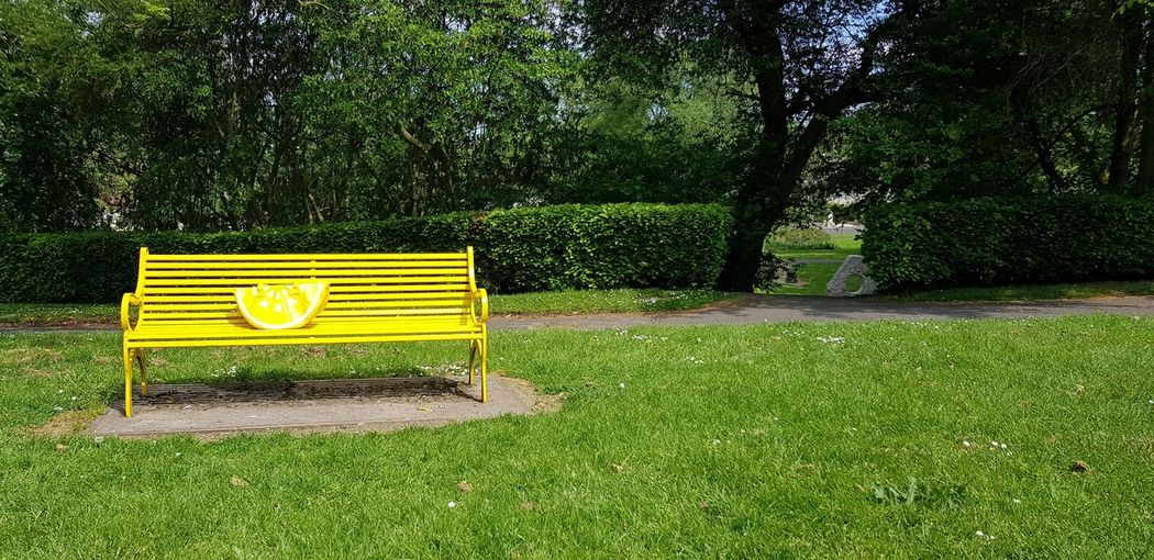 Bench Seat Chair Open Space Outdoors Tree Soccer Field Yellow Soccer Park - Man Made Space Grass Green Color Garden Green Park