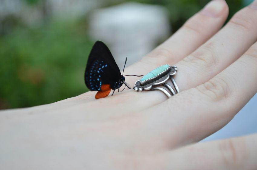 Rare Butterfly Hand Ring Butterfly House Florida United States Atala Butterfly Endangered Species Capture The Moment
