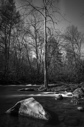 Nature Photography Seascape Photography Smoky Mountains Bare Tree Black And White Nature Bnw_captures Bnwphotography Flowing Water Land Nature Nature_collection Nature_perfection Naturelovers Outdoors Plant River Scenics - Nature Seascape Tree Water Winter