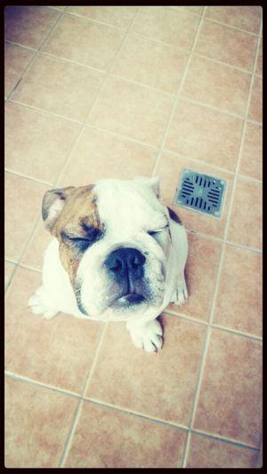 Meditation Goodboy Milvecesdebo Puppy Face