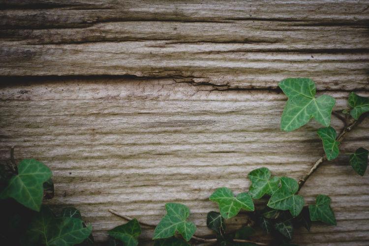 Ivy Leaves Wood