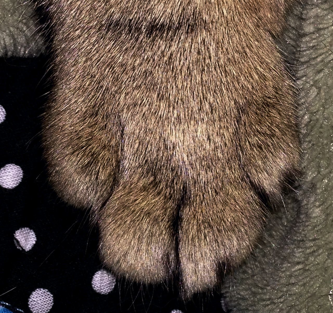 one animal, animal body part, no people, animal leg, animal themes, paw, close-up, mammal, domestic animals, indoors, pets, day