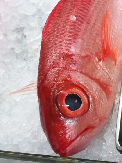 Onaga; red snapper Fish Seafood Red Freshness Raw Food Close-up Local Style Pretty Live,love,Hawaii Fresh Oahu, Hawaii Delicious Nice Catch No People Good Luck Sashimi  Happy New Year Red Snapper Beautiful Red Onaga Seafood Tasty Catch Of Fish Grocery Shopping Food Stories