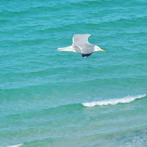 Tunisia IgersTunisia Sea Wave Seagull Bird Wikilovesearth الصيف الي هو متحفن بالنسمة البحرية ... :)