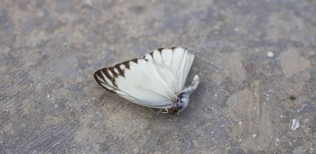Animal Themes Beauty In Nature Butterfly Close-up Fragility Insect Nature No People One Animal Outdoors