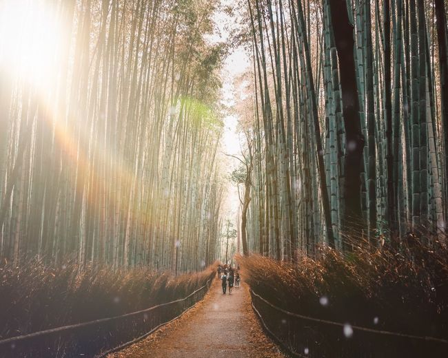 Bamboo forest Tree Forest Nature One Person Plant Sunlight Land Tranquil Scene Non-urban Scene Diminishing Perspective Transportation Walking Men Rear View Beauty In Nature Real People Lifestyles Leisure Activity The Way Forward Direction EyeEmNewHere It's About The Journey