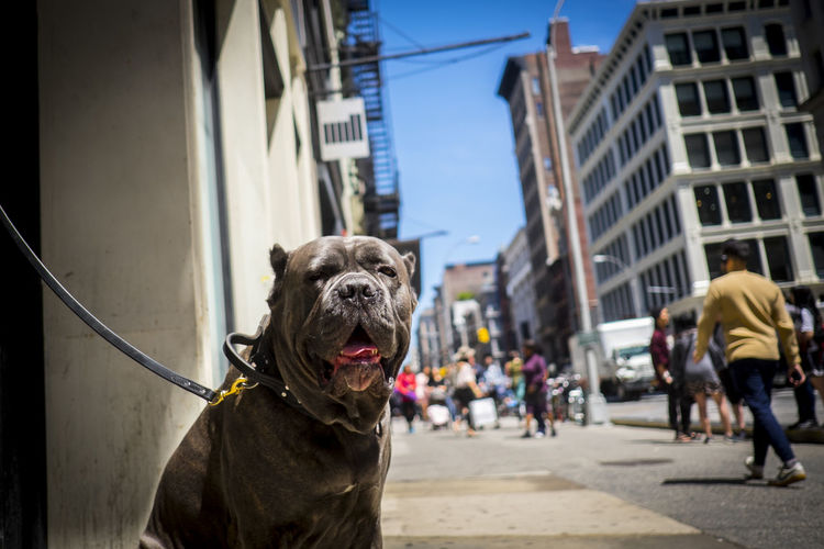 Close-Up Of Dog Relaxing On Footpath In City