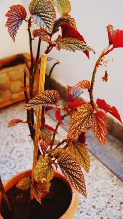 #sonyalpha #sony #Alpha58 Close-up Petal Plant Life Flower Head Growing Fragility In Bloom First Eyeem Photo