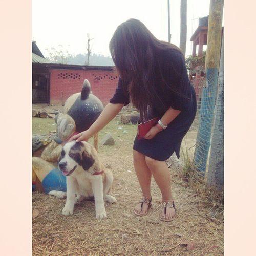 Coz Baby St .Bernard is toooooo Cute Loveittobits DogLoverForever 😘🐶❤♡