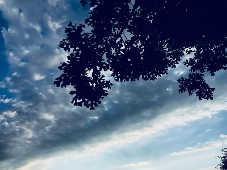 Look Up Clouds Leaves Silhouette Sky Low Angle View Nature Beauty In Nature Cloud - Sky Tree Outdoors No People Scenics Tranquility Blue Branch