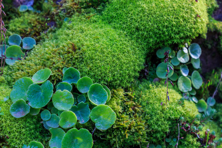 Close-up of green plants in water