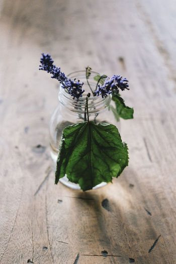Close-up Flower Flower Head Flowering Plant Fragility Lavender Leaf Leaves No People Plant Plant Part Selective Focus Table Vulnerability  Wood - Material