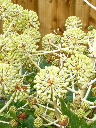 Castor oil plant. Plant Growth Nature Beauty In Nature Leaf Outdoors Fragility Flower No People Green Color Day Close-up Flower Head Freshness