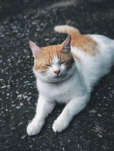 Catnap Cats 🐱