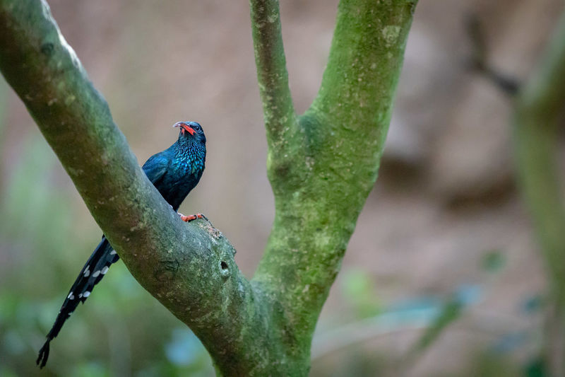 Green Wood Hoopoe Animal Wildlife Animal Themes Animal Animals In The Wild Vertebrate Bird One Animal Perching Focus On Foreground Branch Plant Nature Day No People Tree Outdoors Green Color Beauty In Nature Close-up Blue Turquoise Colored