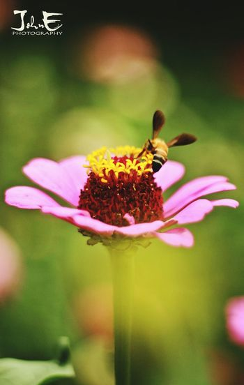 The bee stinger and the flower... Beestinger Deapth Of Field Focusingpoint JohnEphotography