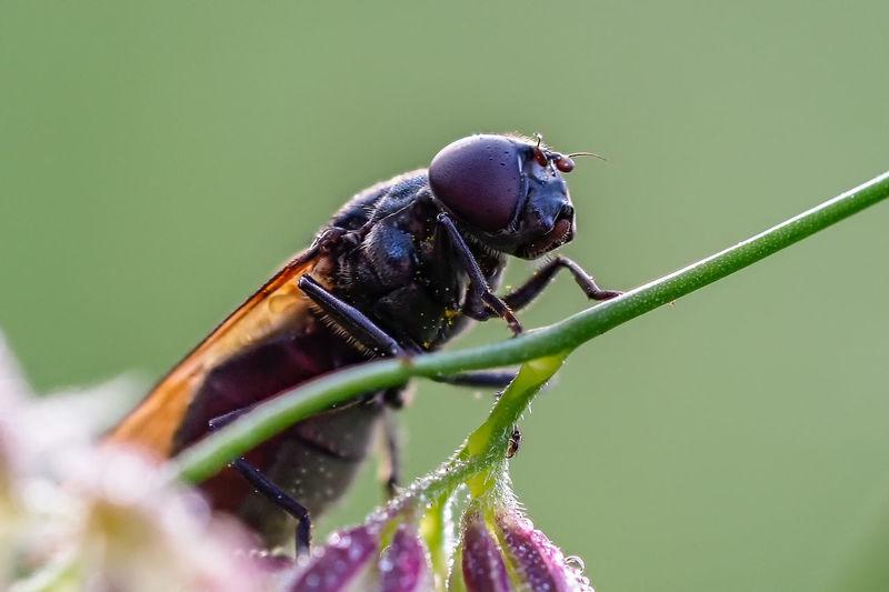 Fliege Animal