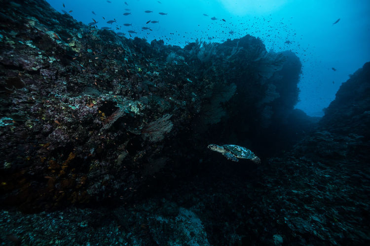green island, Taiwan Adventure Animal Themes Animals In The Wild Beauty In Nature Close-up Coral Day Discovery Exploration Nature One Person Outdoors People Real People Scenics Scuba Diving Sea Sea Life UnderSea Underwater Water Wetsuit