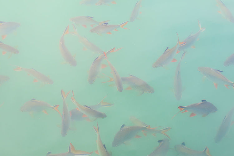 Fish swimming in sea