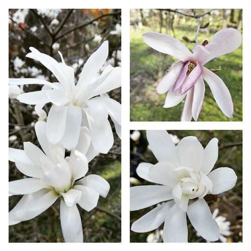 Wiosna Spacerek Zaliczony Flowers beauty instabeauty spring springtime 💜