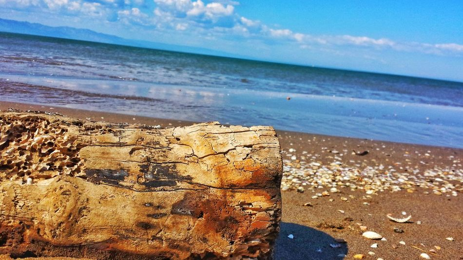Taking Pictures Tree Trunk Sea Sea And Sky Seaside Trunk Detail Trunk In The Water Beach Beach Photography Beach Time