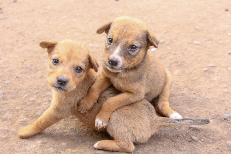 cute puppies Cute Puppy Candid Shot Capture The Moment Dog Dogs Dog Love Dogs Of EyeEm Streetphotography Street Dog EyeEm Eyeem India Pets Portrait Sitting Dog Full Length Young Animal Sand Looking At Camera Puppy Cute