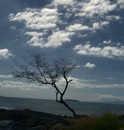 Barren Tree and