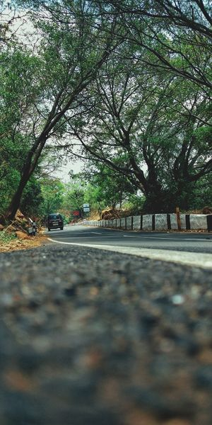Surface level of road amidst trees in park