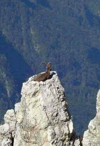 😱😱 amazing ❤️❤️ One Animal Picture First Eyeem Photo Hello World ❤ You Follow My Eye Em 💙 I Follow Back