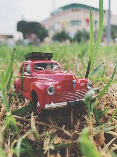 Toy car on field