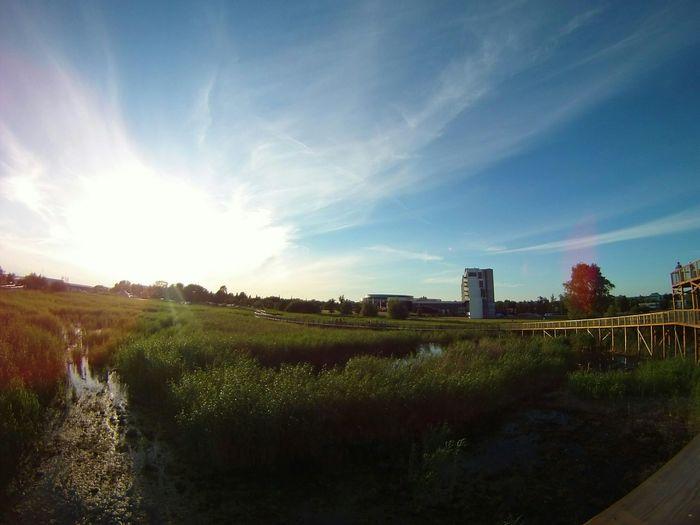 Evening Evening Sky Lens Flare Sun Flare Enjoying Life Polaroid The Great Outdoors - 2015 EyeEm Awards