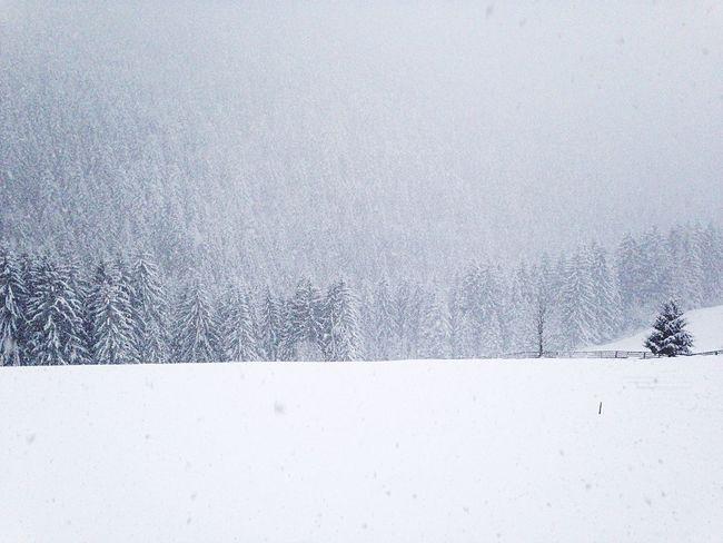 Snow Snowing Wintertime Winter Welschnofen Fence Trees Covering White Südtirol Italy Nova Levante