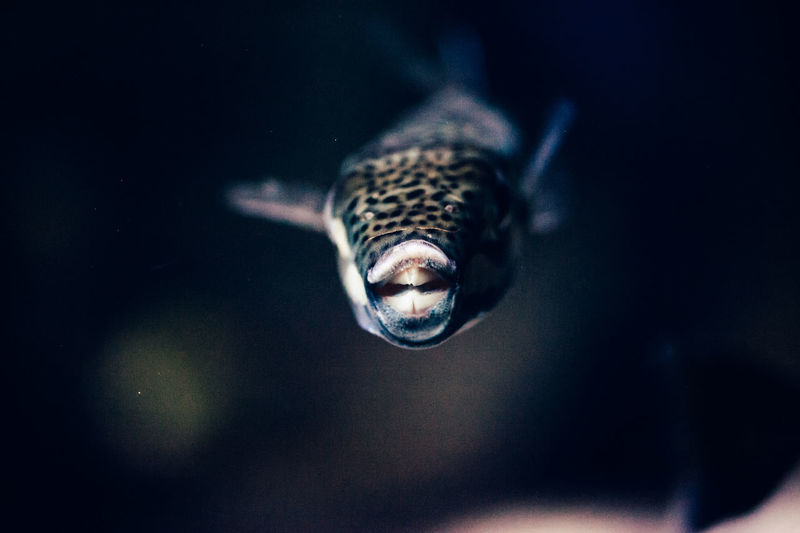 Close-up of fish swimming in tank at aquarium