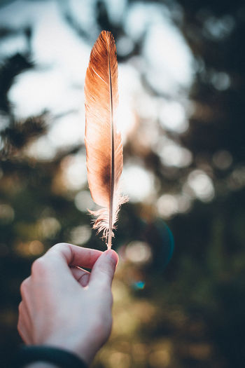 Close-up of hand holding feather during autumn
