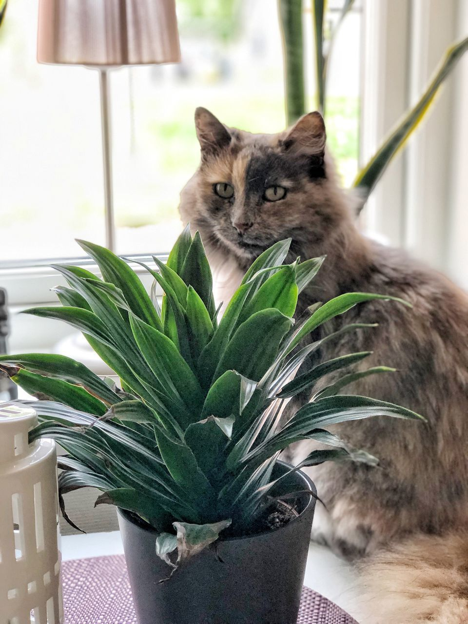 mammal, animal, one animal, animal themes, domestic, feline, pets, domestic animals, cat, vertebrate, plant, domestic cat, indoors, no people, potted plant, leaf, plant part, sitting, nature, green color, whisker, animal head